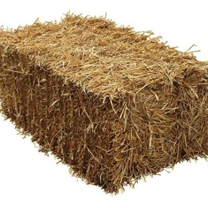 Bale of hay isolated on a white background as an agriculture farm and farming symbol of harvest time with dried grass straw as a bundled tied haystack.