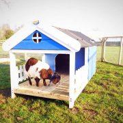 little-pygmy-goat-house