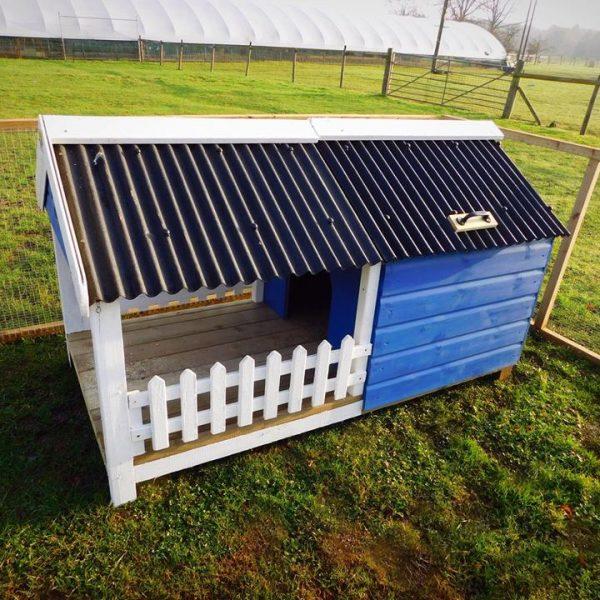micro-pig-house