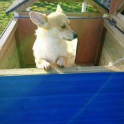 open-roof-dog-house