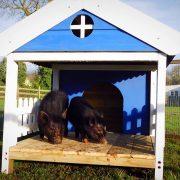 pet-pig-porch