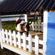 pygmy-goat-fencing